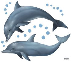 Dolphin Wall Decals, $9.99 (http://www.create-a-mural.com/dolphin-wall-decals.html)