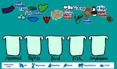 animal classification game - interactive white board friendly!