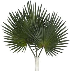 Palm Stem - Set of 3 ($45) ❤ liked on Polyvore featuring home, home decor, floral decor, artificial palm, fake palm trees, artificial palm plants, artificial arrangement and green home decor