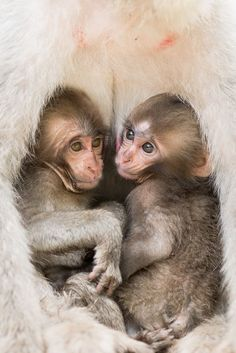 Twins Photo by Takeshi Marumoto — National Geographic Your Shot