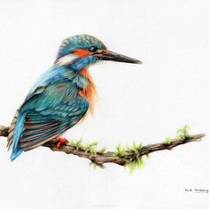 Color Pencil Drawing Ideas It's finished! Kingfisher colour pencil drawing using polychromos pencils… - Colored Pencil Artwork, Coloured Pencils, Color Pencil Art, Wildlife Paintings, Wildlife Art, Animal Paintings, Bird Drawings, Animal Drawings, Pencil Drawings