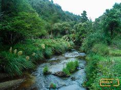 Stream near Okahu Ro