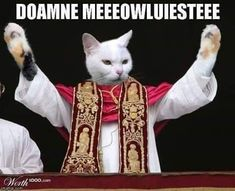 2nd One, Pretty Cats, Funny Pictures, Funny Pics, Animals And Pets, Catholic, Haha, Kittens, Princess Zelda