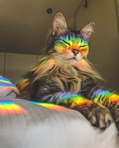 The wise rainbow cat - your daily dose of funny cats - cute kittens - pet memes - pets in clothes - kitty breeds - sweet animal pictures - perfect photos for cat moms Cute Little Animals, Cute Funny Animals, Funny Cats, Funny Humour, Funny Memes, Cute Kittens, Cats And Kittens, Kitty Cats, Beautiful Cats