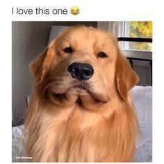 Video by insta: tuckerbudzyn 🎥 Funny Animal Jokes, Funny Dog Memes, Funny Dog Videos, Animal Memes, Funny Dog Shaming, Dog Funnies, Cute Funny Dogs, Cute Funny Animals, Cute Animal Videos