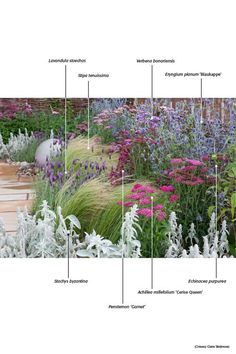 planting combinations, colors, textures
