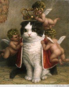 Gato regio  ... kitten/cat/cats