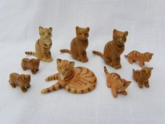 hantel tortoisehell cats