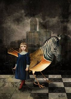 Zebra Bird by Jayne Alexander