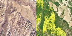 California's Super Bloom So Intense It's Visible From Space  Thanks to above-average rainfall after an epic drought, spectacular flowers are blossoming throughout California, and now you can track it from space.