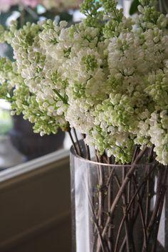 White lilac.