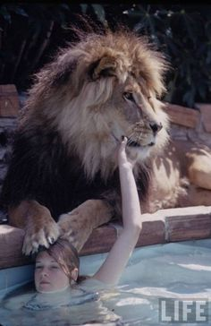 """Neil, the Lion (""""Living with a Lion"""", LIFE Magazine, 1970's) 