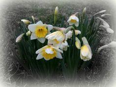 prvé kvety #KVITAL# Plants, Plant, Planets
