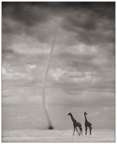 awesome photography by Nick Brandt