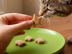DIY Network has recipes for making dog biscuits and cat treats, plus find nutritional advice for keeping your pet healthy.
