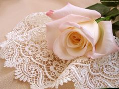 Delicate Pink Rose and Lace