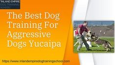 One Of The Skills required For every Dog Trainer That must maintain is their ability And Hundle Easily best dog training for aggressive dogs Yucaipa So inland Empire Dog Training School Will help You to train Your Dogs, Organize Dog Training program For every Type of Dog Dog Training School, Best Dog Training, Training Plan, Training Programs, Schools In Usa, Behavioral Issues, Aggressive Dog, Types Of Dogs, Dog Owners
