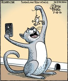 Bizarro - Funny Selfies - Funny Selfies images - - Bizarro The post Bizarro appeared first on Gag Dad. Cat Jokes, Cartoon Jokes, Funny Cat Memes, Funny Cat Videos, Funny Cartoons, Funny Comics, Funny Cats, Funny Animals, Hilarious