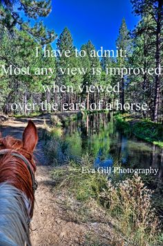 I have to admit: Most any view is improved when viewed over the ears of a horse