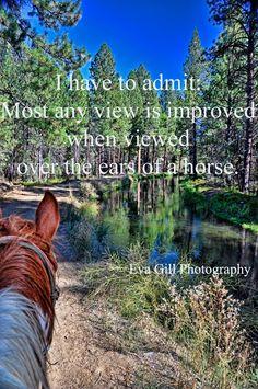 Through the ears of a horse...