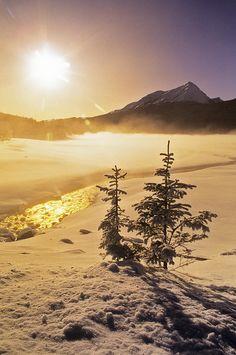 Winter Gold : Medicine Lake, Jasper National Park