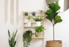 Love plants but can't seem to keep them alive? Choose any on this list of plants you can't kill, and you'll start looking like a gardening pro yourself.