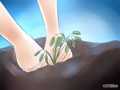 Grow Rhododendron Step 1.jpg