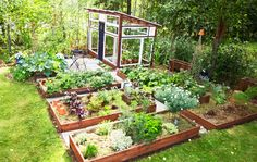 Organic Kitchen Gardening By Maitri Mehta Lake Garden, Veg Garden, Vegetable Garden Design, Edible Garden, Dream Garden, Backyard Vegetable Gardens, Vegetable Garden Planner, Chicken Garden, Raised Garden Beds