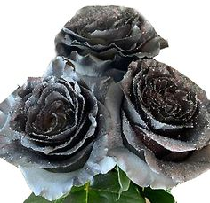 Silver Flowers | Buy Silver Flowers Online | Silver Rose | Silver Thistle Dye Flowers, Fresh Flowers, Blue Succulents, Wholesale Roses, Rose Centerpieces, Glitter Roses, Rainbow Roses, Floral Artwork, Christmas Flowers