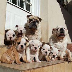 Look at the bulldog family!