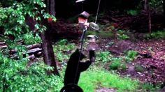 Hungry bear outsmarts bird feeder to earn its dinner http://www.ctvnews.ca/video?clipId=634990&playlistId=1.2421252&binId=1.810401&playlistPageNum=1&binPageNum=1