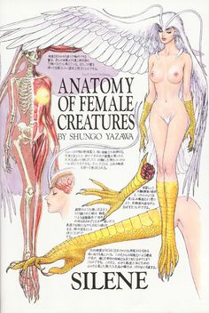 Anatomy of Female Creatures By Shungo Yazawa