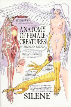 Anatomy of Female Creatures By Shungo Yazawa