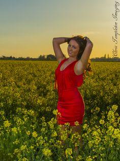 Summer fields, rapeseed.