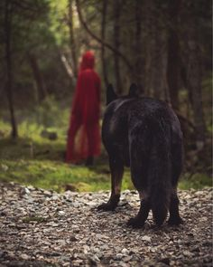 Little Red Riding Hood and the Big Bad Wolf 🐺 submission by Red Riding Hood Wolf, Red Ridding Hood, Angel Artwork, Wolf Images, Dark Fairytale, Big Bad Wolf, German Shepherd Dogs, German Shepherds, Little Red