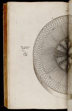 Grew, Nehemiah, 1641-1712.  The anatomy of plants - Biodiversity Heritage Library