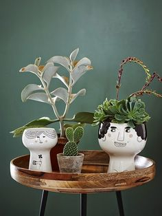 These interesting little characters from Mayer Lavigne liven up any house plant. #abitofacharater #cat