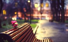 #Danbo with a #scarf on a #bench