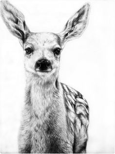 Snappy Pixels Realistic Pencil Drawings of Animals (22 Pictures) - Snappy Pixels