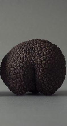 A Black truffe - Tuber melanosporum - technically a fungi, albeit a delicious and extremely expensive one.