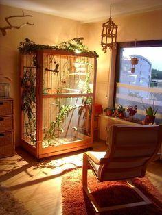 Excellent indoor aviary #howtobuildanaviary #aviariesideas #aviariesdiy