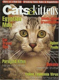 39 Best Cat Magazine Images Cat Magazine Cats Magazine