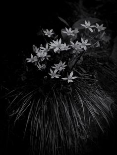 """""""Blue Flowers"""" Great Smoky Mts. National Park; Photograph by David L. Fahey"""