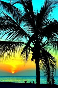 Hawaii Sunset, blue skies, tropical water and Palm Trees. Beautiful Sunset, Beautiful Beaches, Beautiful World, Trees Beautiful, Image Deco, Belle Photo, Pretty Pictures, Beach Pictures, Vacation Spots