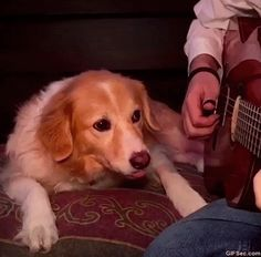 Please stop playing DOG - www.gifsec.com