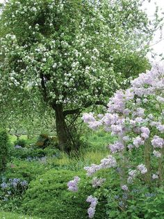 * Apples trees and lilacs ~ memories of Grandma's gardens and my Mom's; memories of walks along country roads with my Grandmother...