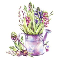 Watering can with hyacinth seedlings and tags. Spring collection in violet shades. Watercolor Cards, Watercolor Illustration, Watercolour Painting, Watercolor Flowers, Ink Pen Drawings, Cute Drawings, Decoupage, Colored Pencil Techniques, Creation Deco