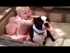 Best Friends in the Crib - Baby and Boston Terrier Dog (Video)