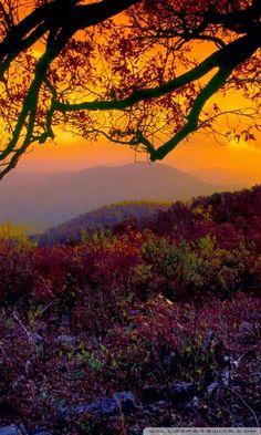 ✯ Autumn Dusk