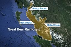 Image result for great bear rainforest pictures